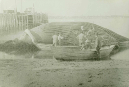 Stripping a Whale