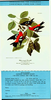 National Audubon Society letter